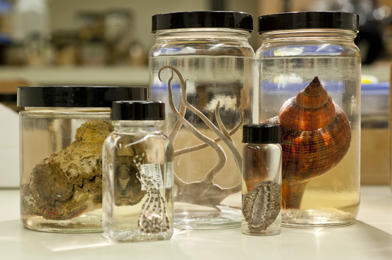 NSF's BIO Postdoctoral Program Has New Collections Research